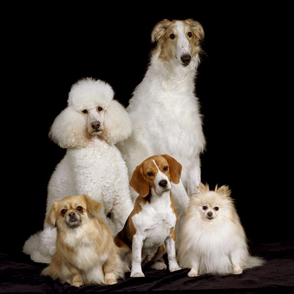 Animal Images pet photo five dogs