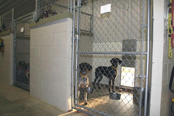 Animal Boarding Suites For Pet Comfort
