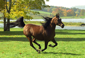 Animal Images running horse