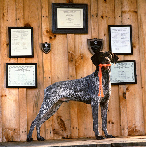 award-winning gun dog